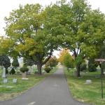 cemetary-trees-023